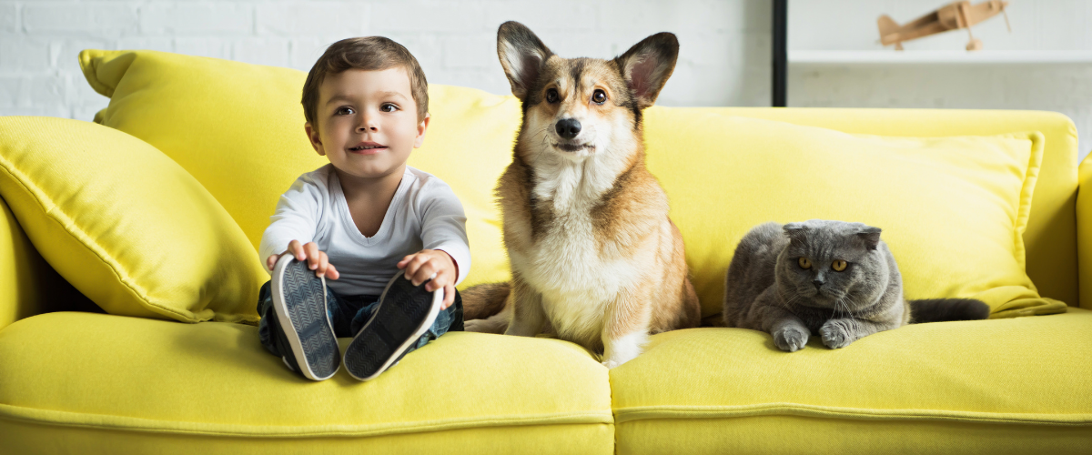 TMA Members Save Up to 20% on Pet Insurance